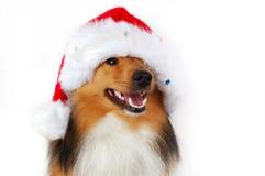 Perro feliz de la Navidad Fotos de archivo