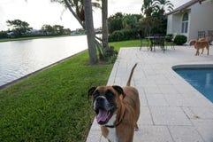 perro feliz en el patio trasero de un hogar Foto de archivo