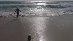 Perro feliz en la playa