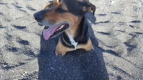 Perro feliz en la playa imagenes de archivo