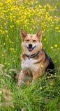 Perro feliz en las flores del campo Imagen de archivo