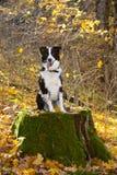 Perro feliz en las maderas. Imagenes de archivo