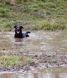 Perro feliz en un agujero del fango Fotografía de archivo