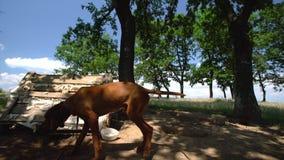 Perro feliz en un campo verde en el campo almacen de metraje de vídeo