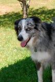 Perro feliz listo para jugar Fotos de archivo libres de regalías