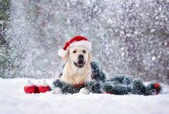 Perro feliz que presenta para la Navidad en la nieve Imagen de archivo libre de regalías