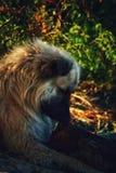 Perro feliz sin hogar imagen de archivo