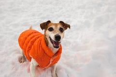 Perro feliz sonriente del invierno Foto de archivo libre de regalías