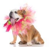 perro femenino mayor Imágenes de archivo libres de regalías