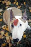 Perro, flores, tristes Fotos de archivo libres de regalías