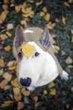Perro, flores, tristes Imagen de archivo libre de regalías