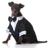 Perro formal Foto de archivo