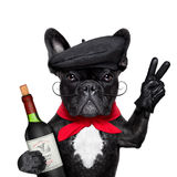 Perro francés fotografía de archivo libre de regalías