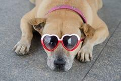 Perro fresco Fotos de archivo