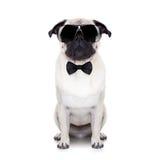 Perro fresco imagen de archivo libre de regalías