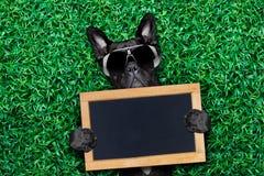 Perro fresco Imágenes de archivo libres de regalías