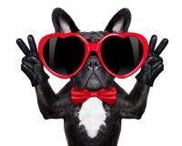 Perro fresco feliz Fotos de archivo libres de regalías