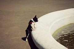 Perro fuente de la sed Agua ucrania Fotos de archivo