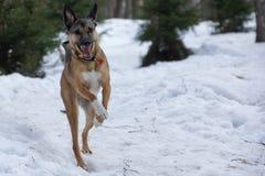 Perro funcionado con en un paseo en un parque del invierno fotos de archivo libres de regalías