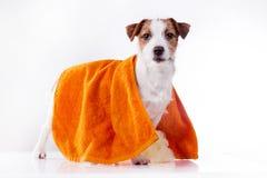 Perro Gato Russel fotografía de archivo libre de regalías
