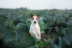 Perro Gato Russel imagen de archivo libre de regalías