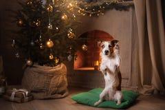 Perro Gato Russel Estación 2017, Año Nuevo de la Navidad Foto de archivo libre de regalías
