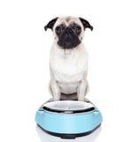 Perro gordo en escala Foto de archivo