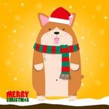 Perro gordo grande lindo del Corgi Galés de la Feliz Navidad Foto de archivo libre de regalías