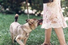 Perro grande adorable en un paseo con su dueño, mongre lindo del marrón del ojo Imagen de archivo