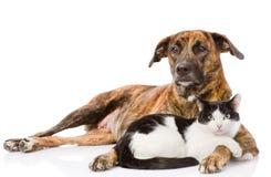 Perro grande y gato que mienten junto En el fondo blanco Fotos de archivo