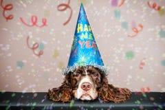 Perro gruñón del Año Nuevo Fotos de archivo