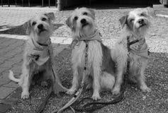 Perro, grupo de la muchacha en Alemania Imagen de archivo