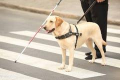 Perro guía que ayuda al hombre ciego imagen de archivo