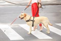 Perro guía que ayuda a la mujer ciega imagen de archivo libre de regalías