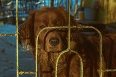 Perro guardián de Brown fotografía de archivo