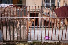 Perro guardián en el balcón Imágenes de archivo libres de regalías