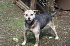 Perro guardián en la granja Imagen de archivo