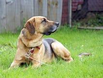 Perro guardián en la yarda foto de archivo