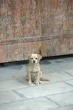 Perro guardián en Tíbet Imagen de archivo