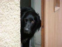 Perro guardián negro Fotos de archivo