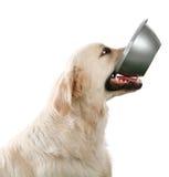 Perro hambriento Imagen de archivo libre de regalías