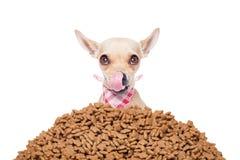 Perro hambriento Fotografía de archivo libre de regalías