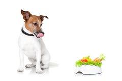 Perro hambriento con el cuenco sano Foto de archivo