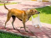 Perro hambriento con su comida Fotos de archivo