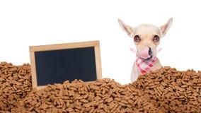 Perro hambriento detrás de la comida del montón Fotos de archivo