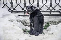 Perro hambriento en la calle Imagen de archivo