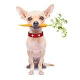 Perro hambriento sano Fotografía de archivo libre de regalías