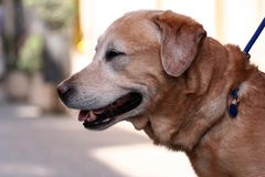 Perro - harness 1 Fotos de archivo libres de regalías