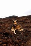 Perro hermoso Fotografía de archivo