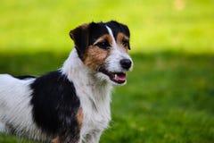 Perro hermoso Fotos de archivo libres de regalías